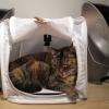 Bernice's Light Tent