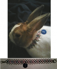 Cute bunny with simple 4-1 collar
