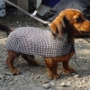 doginmaille