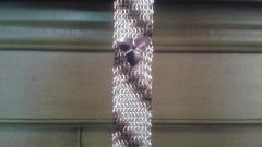 Neck Tie #3