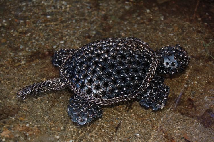 Turtle #3