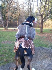 Swissie battle-dog armor, evolution #2, back view